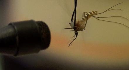 mosquito_hp