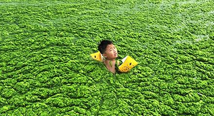 algae_hp