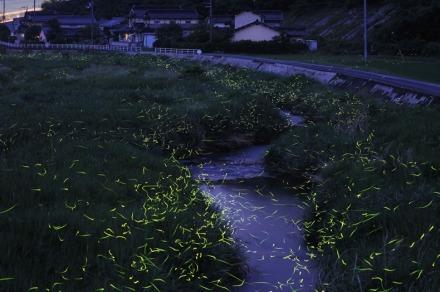 gold-fireflies-10[2]